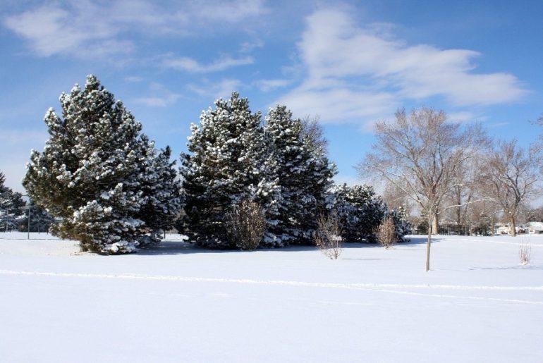 Свежий снег в морозный день
