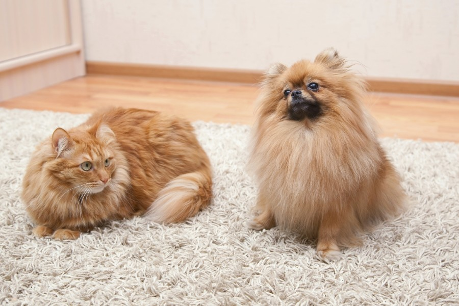 Чем почистить шерсть коту