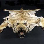 Shkura_tigra_Шкура тигра
