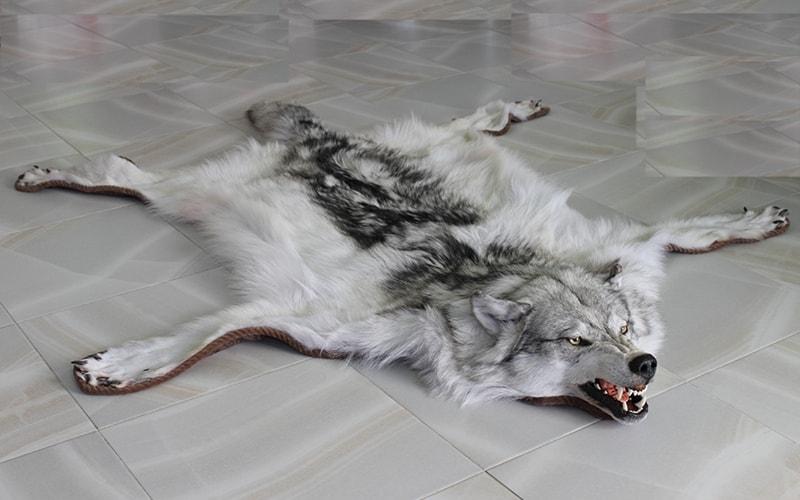 Shkura_volka_na_polu_Шкура волка на полу