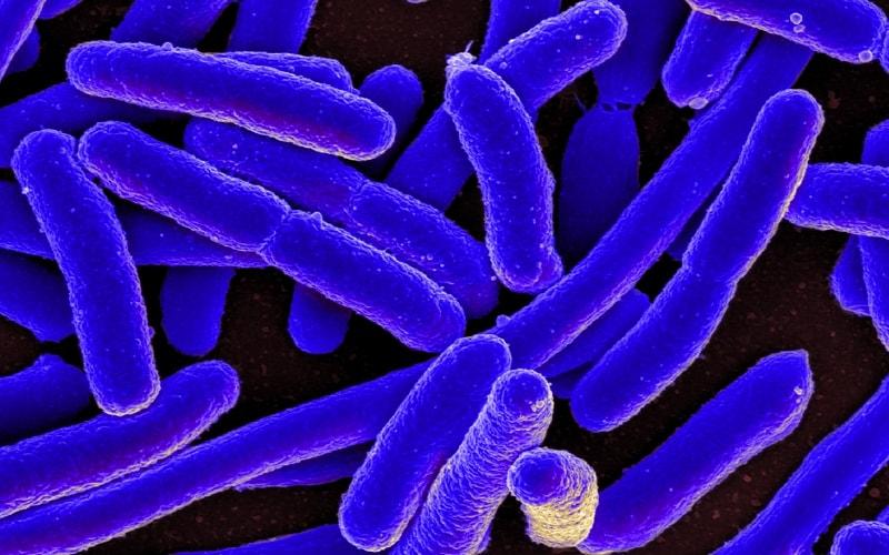 Bakterii_v_kovre_Бактерии в ковре
