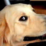 Zapah_sobaki_na_kovre_Запах собаки на ковре