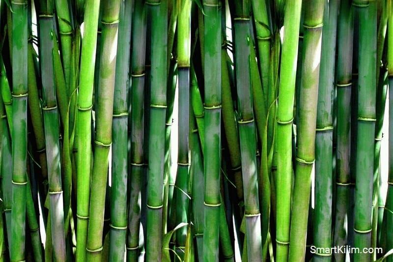 Бамбук для производства ковров